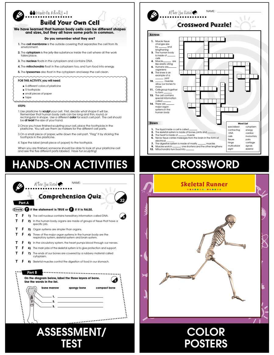 Cells, Skeletal & Muscular Systems: The Skeletal System - Bones Gr. 5-8 - Chapter Slice eBook