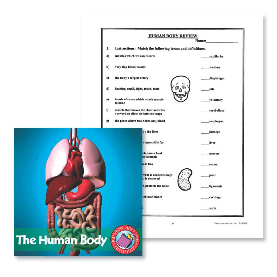 The Human Body: Review Gr. 4-6 - WORKSHEET - eBook